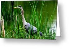 The Crane 2010. No.2 Greeting Card