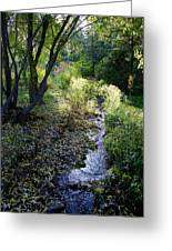 The Creek At Finch Arboretum 2 Greeting Card