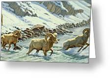 The Crossing - Bighorn Greeting Card