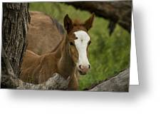 The Curious Colt  Greeting Card