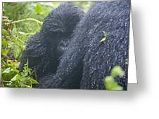 The Curious One Greeting Card