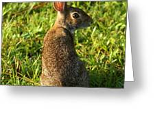 The Curious Rabbit Greeting Card