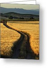 The Curved Way. Greeting Card