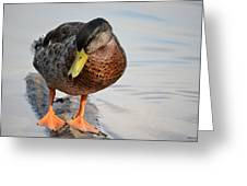 The Cute Brown Duck Greeting Card
