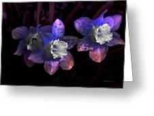 The Daffodil Trio Greeting Card