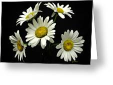 The Daisy Five  Greeting Card
