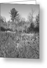 The Dance Of The Cattails Bw Greeting Card