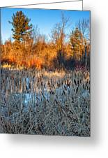 The Dance Of The Cattails Greeting Card