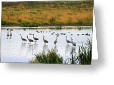 The Dance Of The Sandhill Cranes Greeting Card