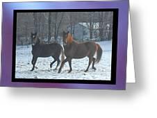 The Dancing Paso Fino Stallions Greeting Card