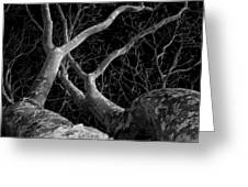 The Dark And The Tree 2 Greeting Card by Fabio Giannini