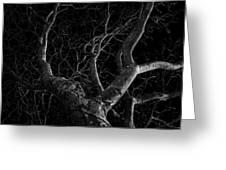 The Dark And The Tree Greeting Card