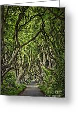 The Dark Hedges Greeting Card by Evelina Kremsdorf