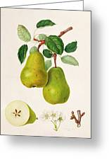 The D'auch Pear Greeting Card by William Hooker