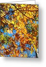 The Dazzling Colors Of Fall Greeting Card