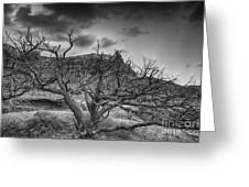 The Dead Pinion Tree Hdr Bw Greeting Card