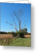 The Dead Tree Greeting Card