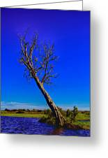 The Death Of  A Tree V5 Greeting Card