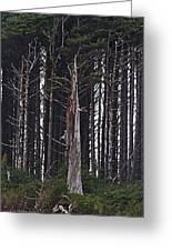 The Deep Dark Sharp Forest Greeting Card