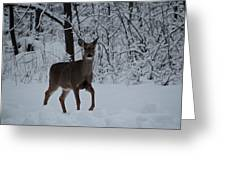 The Deer In The Snow Greeting Card