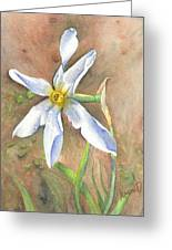 The Delicate Autumn Lady - Narcissus Serotinus Greeting Card