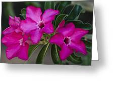 The Desert Rose  Greeting Card