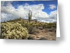 The Desert Southwest Greeting Card