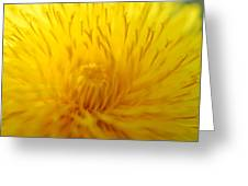 The Detail Is In The Dandelion Greeting Card