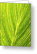 The Detail Of Plant Leaf, Salt Lake Greeting Card