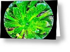 The Dew No.12 Greeting Card