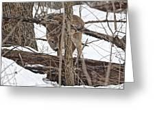 The Doe And The Snow - Odocoileus Virginianus Greeting Card