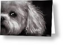 The Dog Next Door Greeting Card