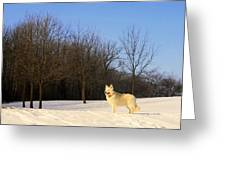 The Dog On The Hill Greeting Card