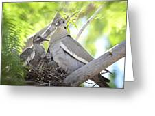 The Dove Family  Greeting Card
