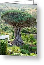 The Dragon Tree / El Drago Milenario Greeting Card by Gavin Lewis