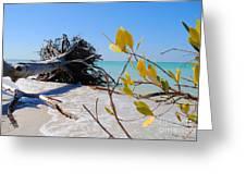 The Driftwood Beach Tree Greeting Card