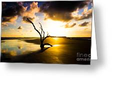 The Driftwood Tree Folly Beach Greeting Card