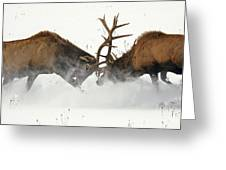 The Duel Of Fighting Elk Greeting Card