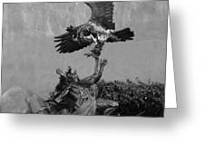 The Eagle And The Indian In Black And White Greeting Card