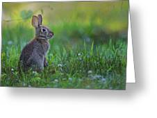 The Eastern Cottontail Greeting Card