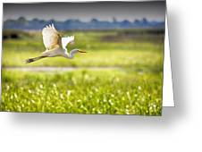 The Egret In Flight Series V3 Greeting Card