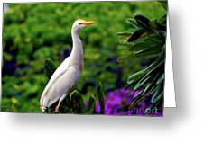The Egret Outside My Window Greeting Card