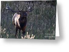 The Elegant Elk Greeting Card