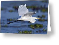 The Elegant Great Egret In Flight Greeting Card
