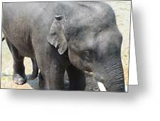 Asian Elephant Close Up Greeting Card