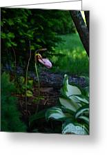 The Elusive Lady Slipper Lll Greeting Card