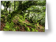 The Elven Forest No2 Wide Greeting Card