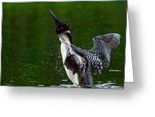 The Ever Elusive Loon Coming Out Of Dive Greeting Card