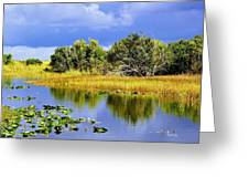 The Everglades Greeting Card