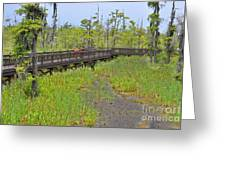The Everglades Of Texas Greeting Card